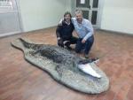 Krokodil für einen Italiener