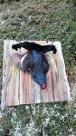 Birkhahn Stilleben auf Dachschindeln