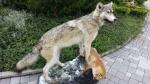Wolf mit Fuchs als Beute