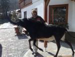 Herr Scherzer mit seiner Rappenantilope